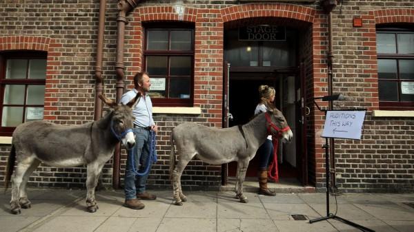 Donkey Auditions