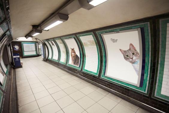 cats-underground-0