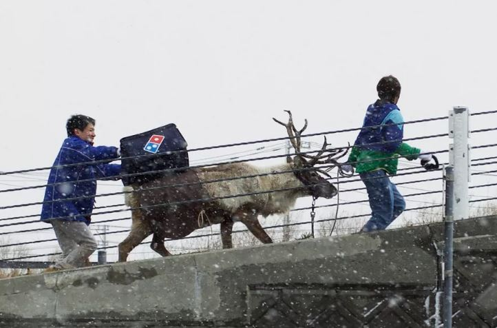 dominos-reindeer